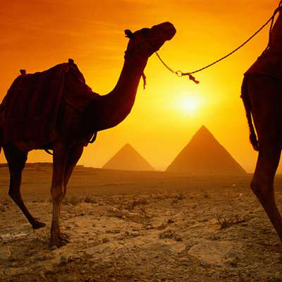 A-Z Egyptian Arabic verbs (no typing)