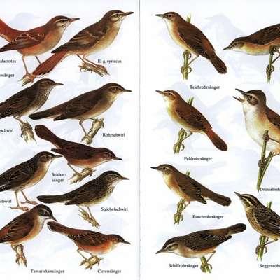 Vogel Bedeutung