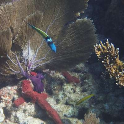 tropical coral reef fish identification memrise