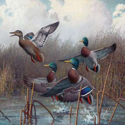 North American Waterfowl
