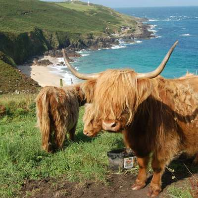 Scots in Pictures 1: Animals