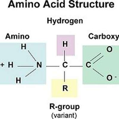 Amino Acid Structures
