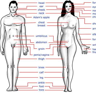 Body Parts - Memrise