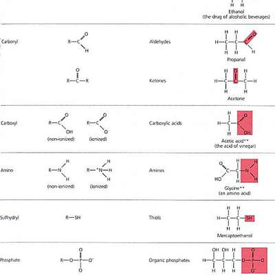 AP Biology-Functional Groups