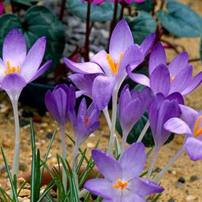 Plant Identification: Early Spring Plants