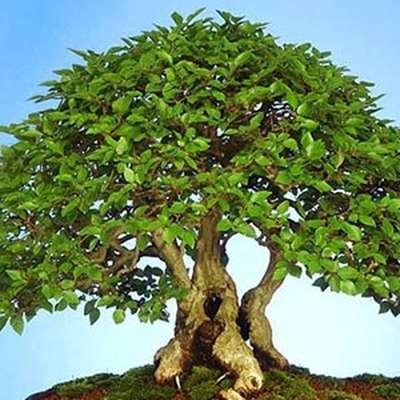 """0100 """"Листья деревьев и кустарников"""""""