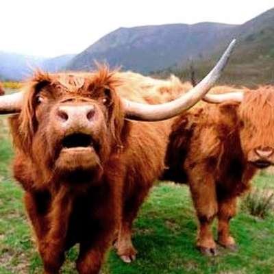 1b gaelic greetings and easy phrases memrise 1b gaelic greetings and easy phrases m4hsunfo