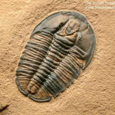 Level 3 - Fossil Identification - Memrise