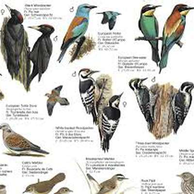 150 Scientific Names of European Birds