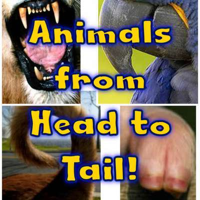 Animals from head to tail!