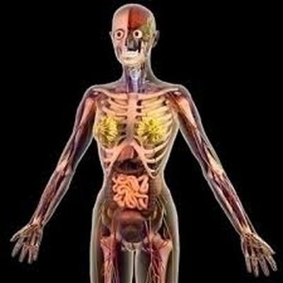 Cells Tissues Organs Systems Ks3 Memrise