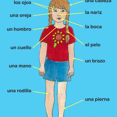 Body Parts Labeled In Spanish. Girls Main Parts Of Body Is Label ...