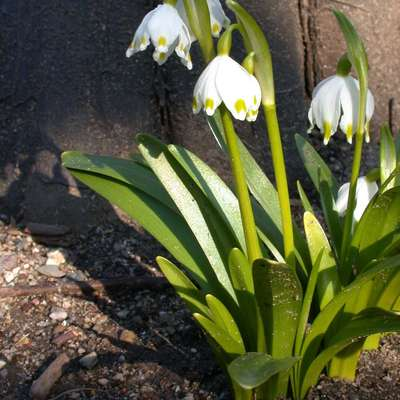 Plant Identification: Spring Flowers