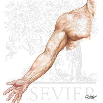 Upper Limb Anatomy Lecture 1 Skeleton Memrise