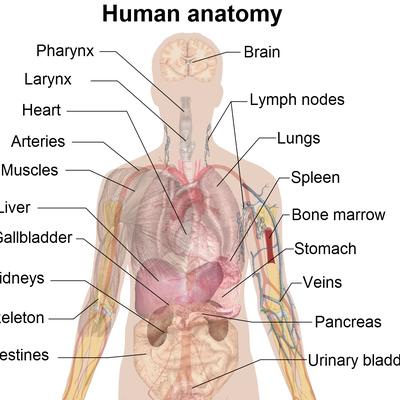 medical terms memrise