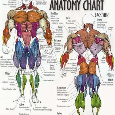 anatomy ebooks