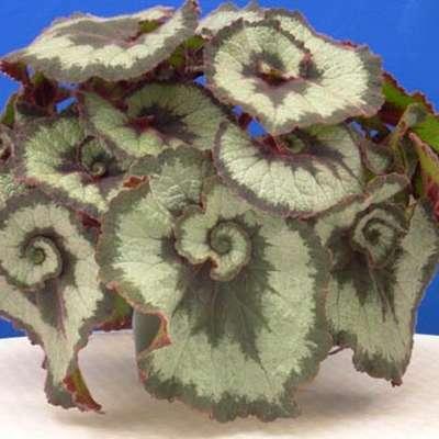 Plant Identification: Common Houseplants