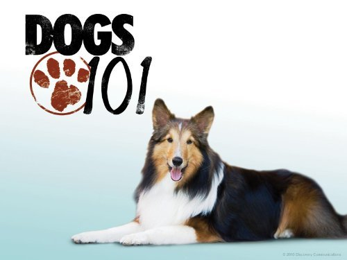 Dog breeds from Dogs 101