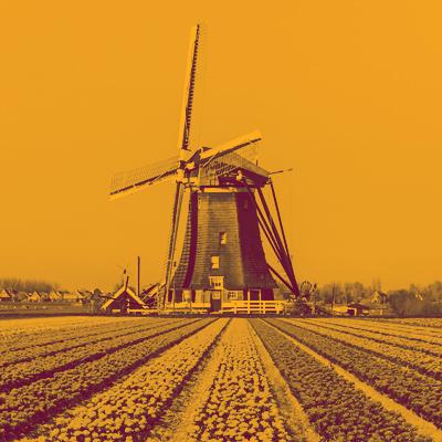 Dutch 3