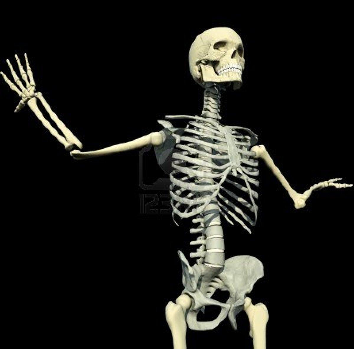 Bones Of The Human Body Memrise