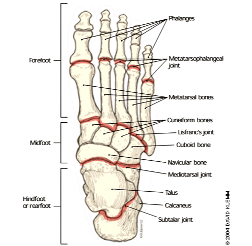 A fun and easy way to remember 'Mid-Tarsal Joint' in ...