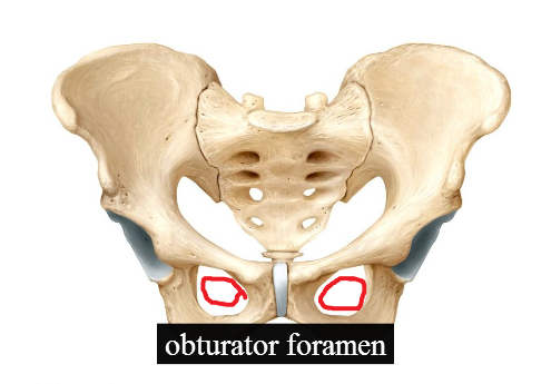 Obturator Foramen A fun and easy way to remember ' obturator foramen ...
