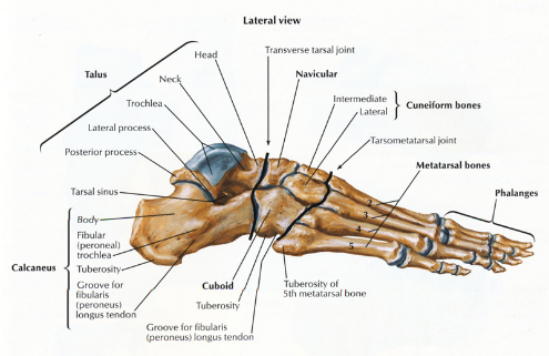 talonavicular joint steroid injection