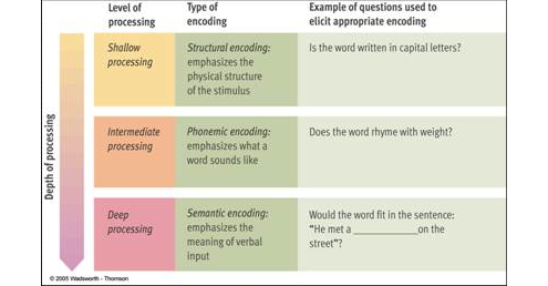 the levels of processing model essay Encoding processes: levels of processing and existing knowledge structures1 initial processes that occur early in the stages of an information processing model.