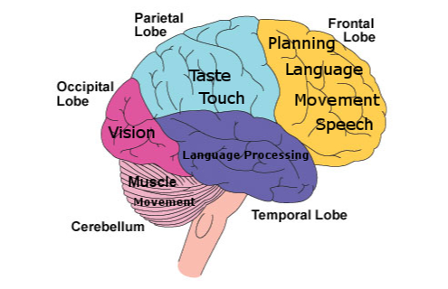 A fun and easy way to remember 'Functions of Frontal Lobe ...