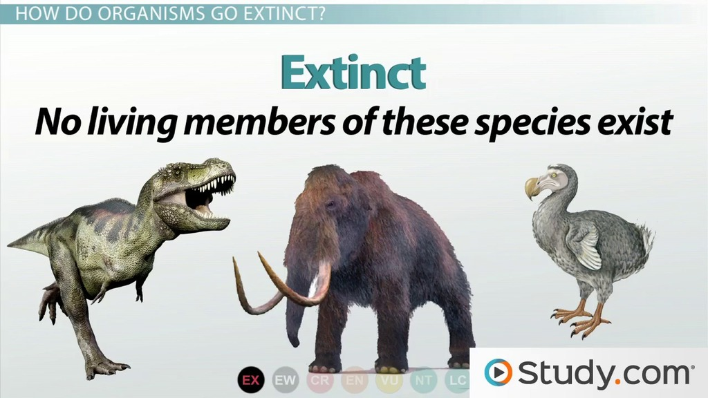 essay on extinct animals Introduction endangered animals are one of the most issues that are affecting the earth today endangered animals are any species of animals that is at significant risk of extinction due to the dramatic decline in its population and habitat destruction.