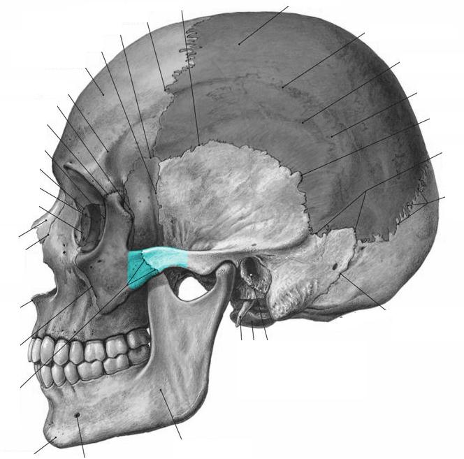 Level 12 - Gelenke  Knochenpunkte Etc