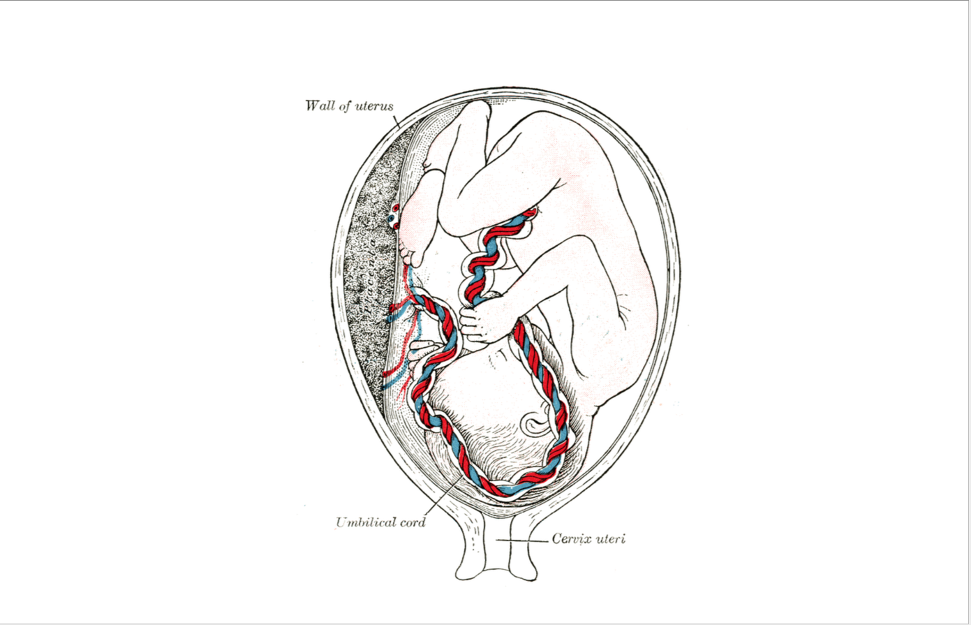 level 1 - gray u0026 39 s anatomy