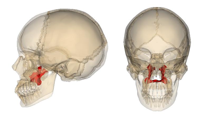 Level 2 Bones Of The Human Body Memrise