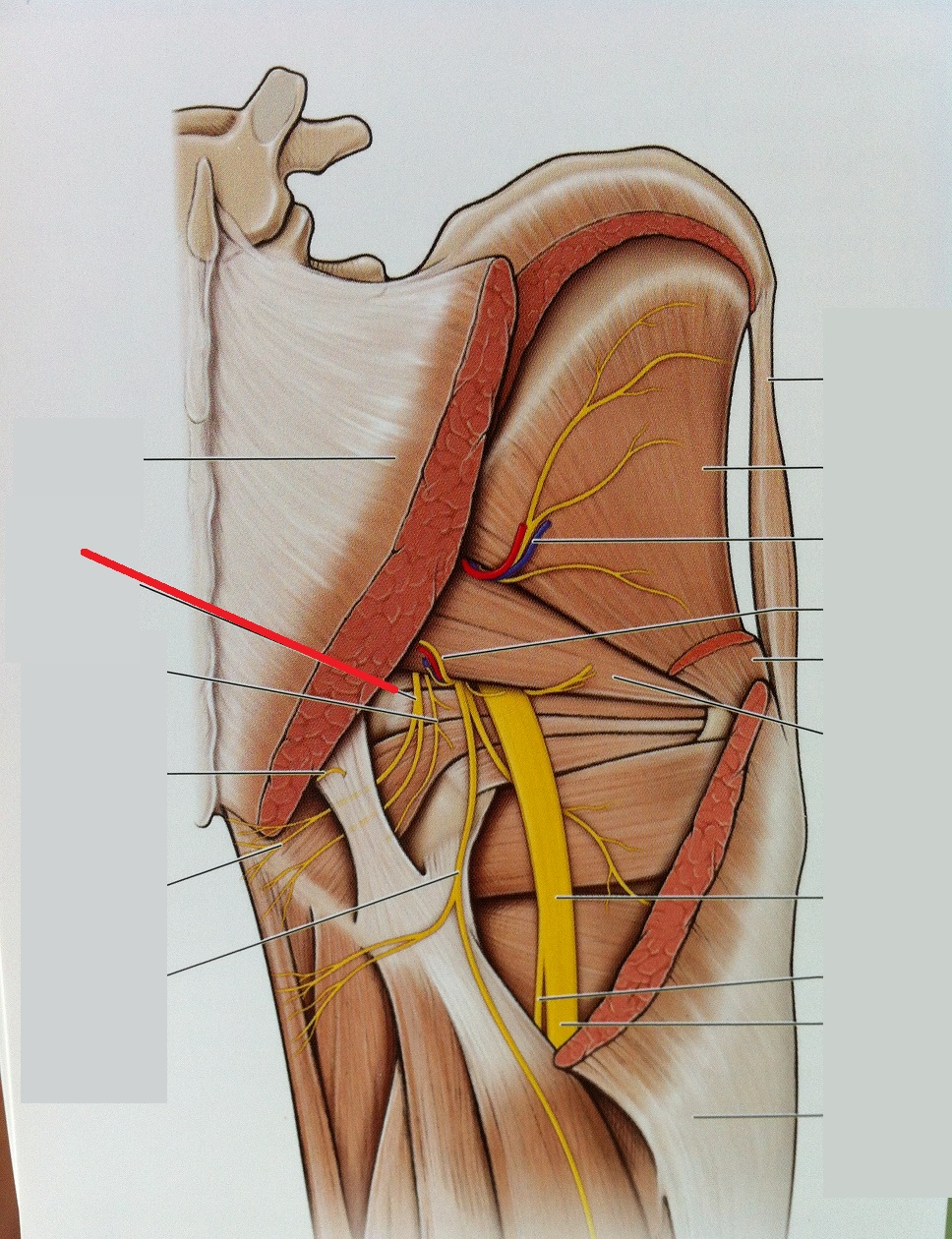 Level 102 Anatomy Of The Extremities Memrise