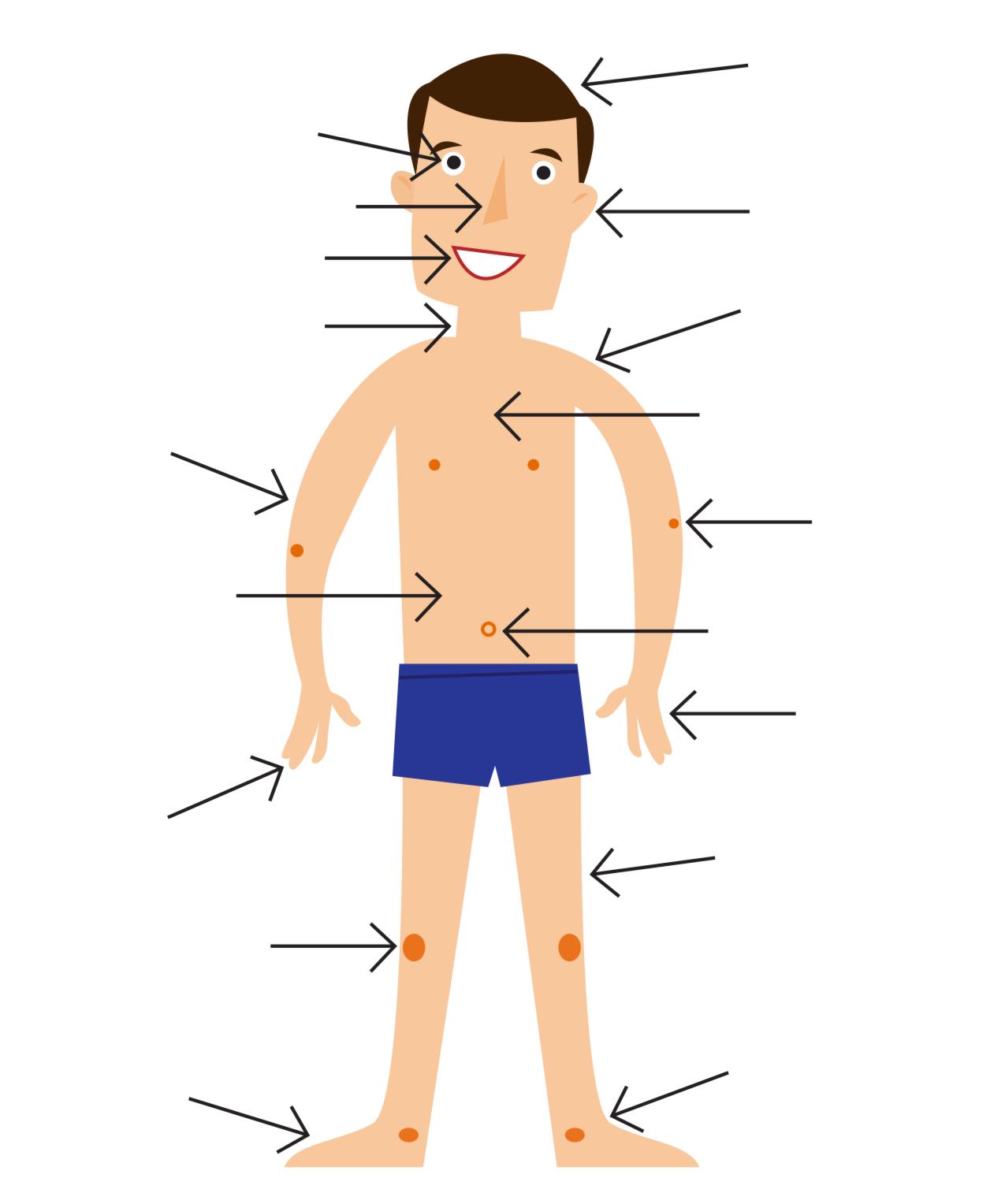 Летием, картинка человека в полный рост для детей части тела