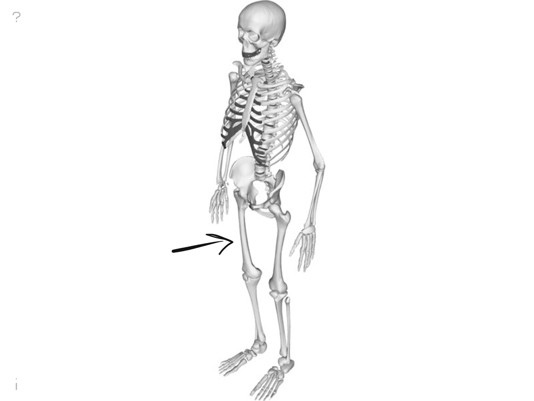 Level 4 - PE - The Human Body - Memrise