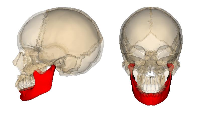 Level 2 Skeletal Anatomy Memrise
