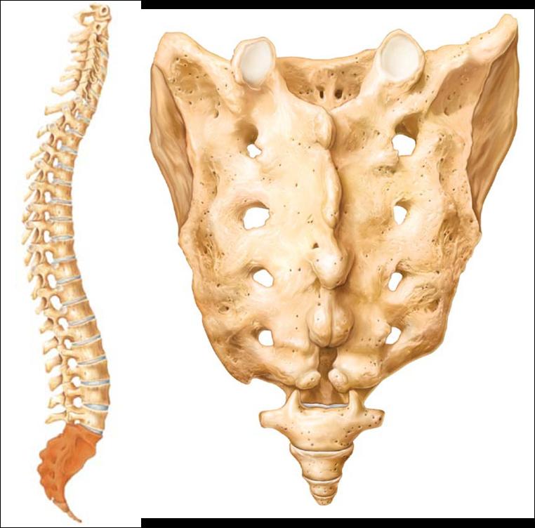 Level 3 Skeletal Anatomy Memrise