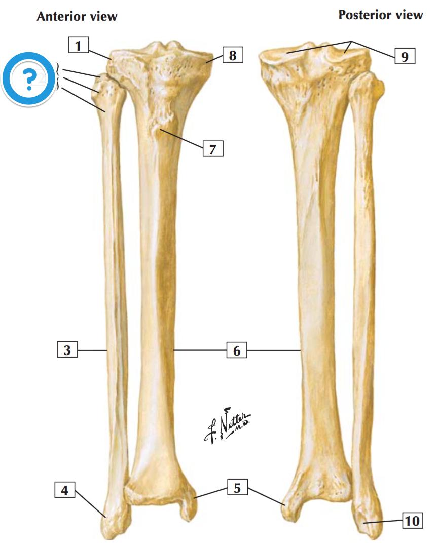 Level 9 Mbchb Anatomy Dundee Memrise