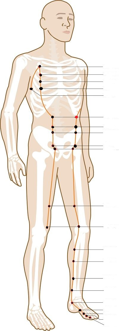 Level 7 - Location Spleen Points - Acupuncture, Channel ...
