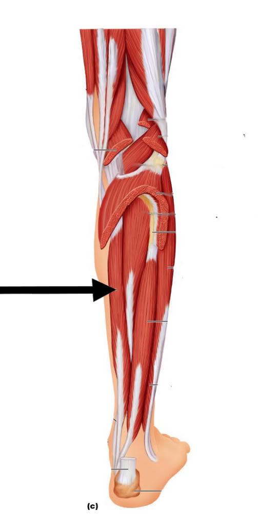 level 8 anatomy and physiology i memrise