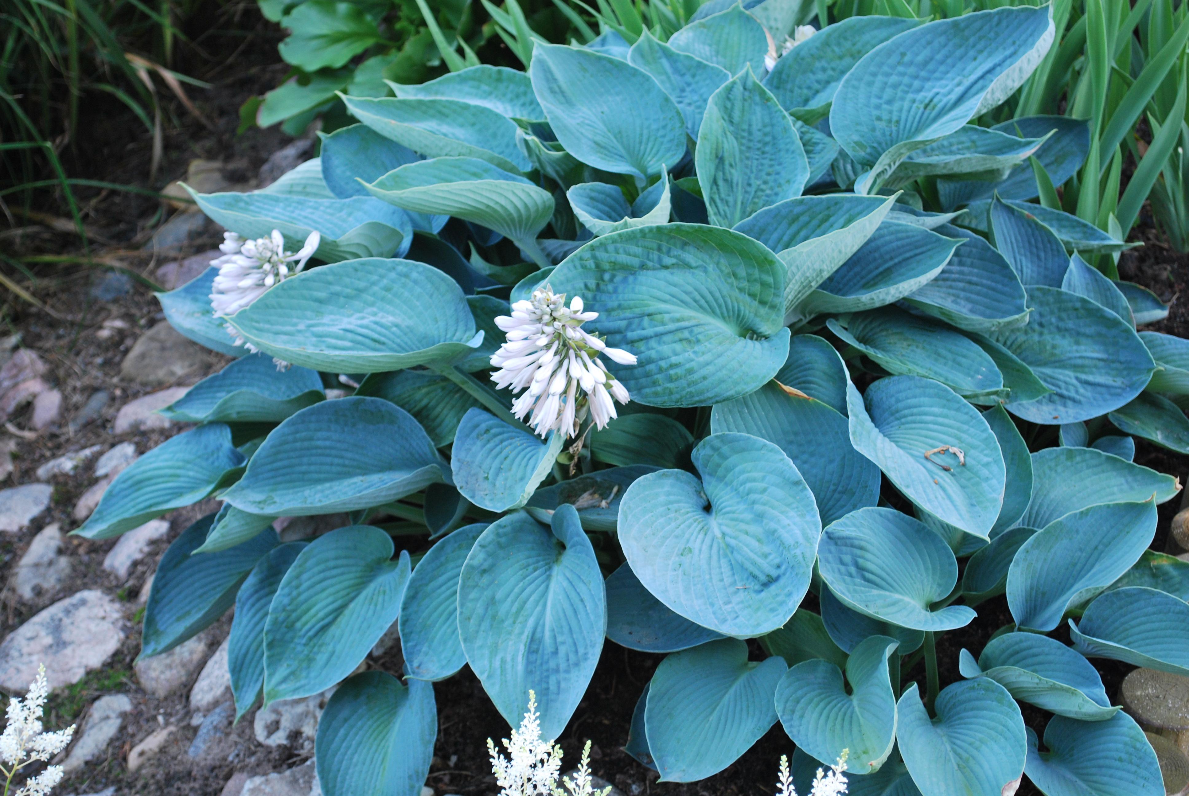 Plant Ident