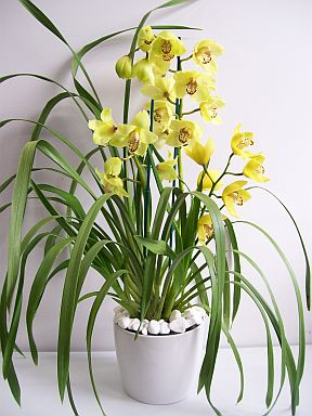 Level 1 Plant Identification Common Houseplants Memrise